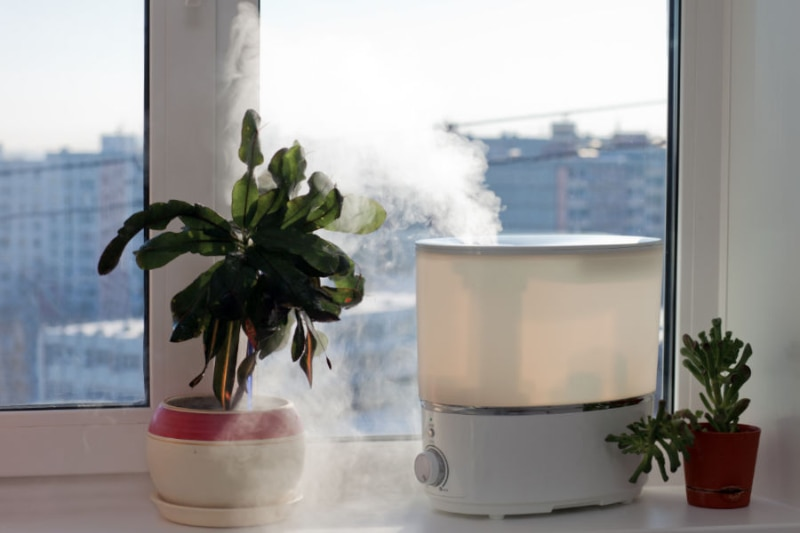 Plant and humidifier indoor